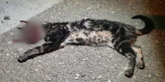 Die Jugendlichen quälten und töteten die Katze.