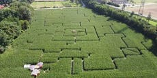 Mega-Mais-Labyrinth ist größer als drei Fußballfelder