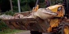 """Dorf in Angst schlägt riesigem Krokodil-""""Dämon"""" Kopf ab"""