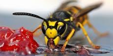 Wespen: Das solltet ihr auf keinen Fall tun!