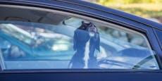 Herrchen ließ Hund in Hitze-Auto schmoren
