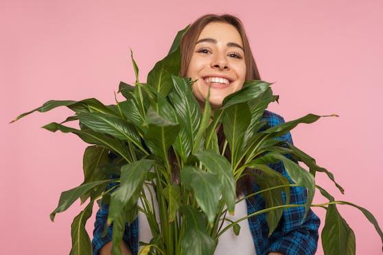 Angeblich lässt sich mit einer Mischung aus Feng-Shui und Astrologie die perfekte Pflanze für deine Wohnung finden.