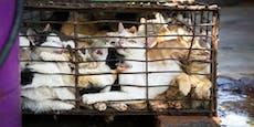 In Vietnam werden jährlich 1 Million Katzen gegessen