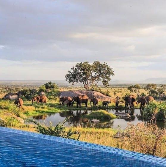 Pool mit Ausblick auf Elefanten in Tansania