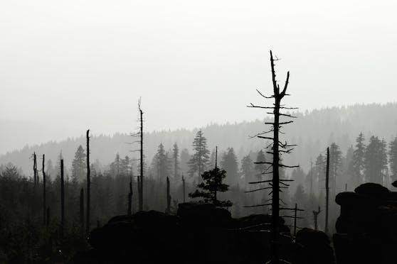 Je mehr Wälder sterben, desto näher rückt die Erde (oder Menschheit) dem Weltuntergang.