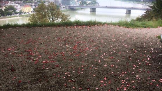 Die Wiese ist über und über mit Plastikrosenblätter verschmutzt.