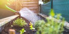 Die 5 größten Fehler beim Pflanzen-Gießen