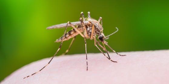 Nicht nur der Geruch von Schweiß zieht Mücken magisch an.