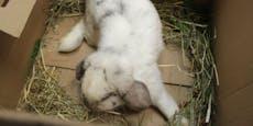 Kaninchen-Dame in Karton auf Donauinsel ausgesetzt