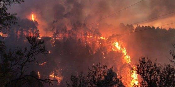 Mehrere Hektar Wald sind abgebrannt.