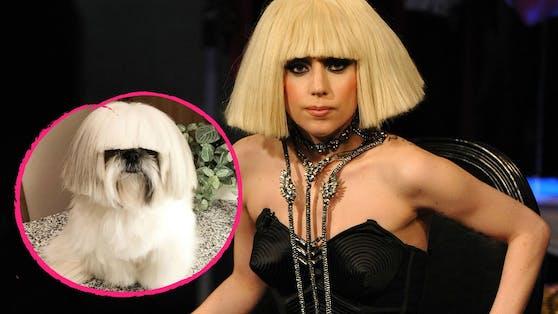Lady Gaga hat einen felligen Imitator. Nur die Gesangsqualität dürfte unterschiedlich sein.