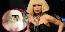 Herrlich! Dieser Instagram-Hund sieht aus wie Lady Gaga