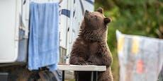 """Bären-Terror: """"Wir sperren uns jeden Abend ein"""""""