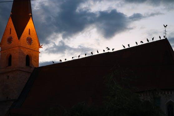 Rund 50 Störche machten es sich auf dem Kirchendach und einem daneben stehenden Kran gemütlich.