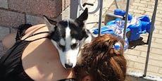 Hund in Gartentor eingeklemmt