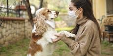 Bestätigt: Menschen übertragen Corona an ihre Haustiere