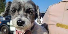 Mann lässt Hund bei 55 Grad Celsius im Auto zurück