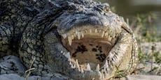 14-jähriger Bursch von Krokodil gefressen