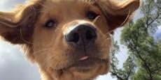 Hund findet Handy im Park und tut damit Unglaubliches