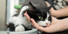 Angst vor Katzenhäuter – schon wieder Samtpfote rasiert