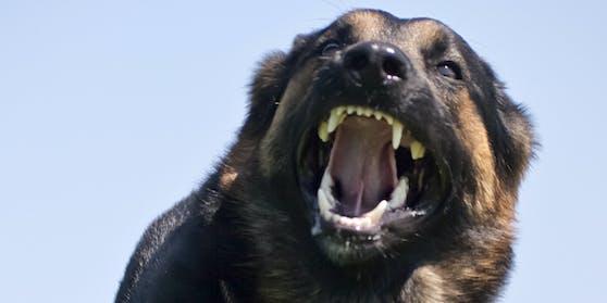 Ein Hund mit aufgerissenem Maul (Symbolbild)