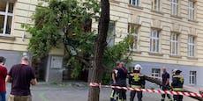 Sturm entwurzelt Baum in Wien, der fliegt auf Schule