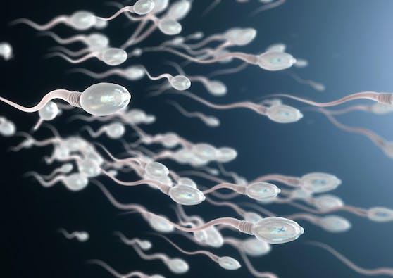 Die Samenqualität von 43 geimpften Männern wurde untersucht. (Symbolbild)