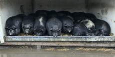 Pfotenhilfe: Tier-Gnadenhof völlig überflutet