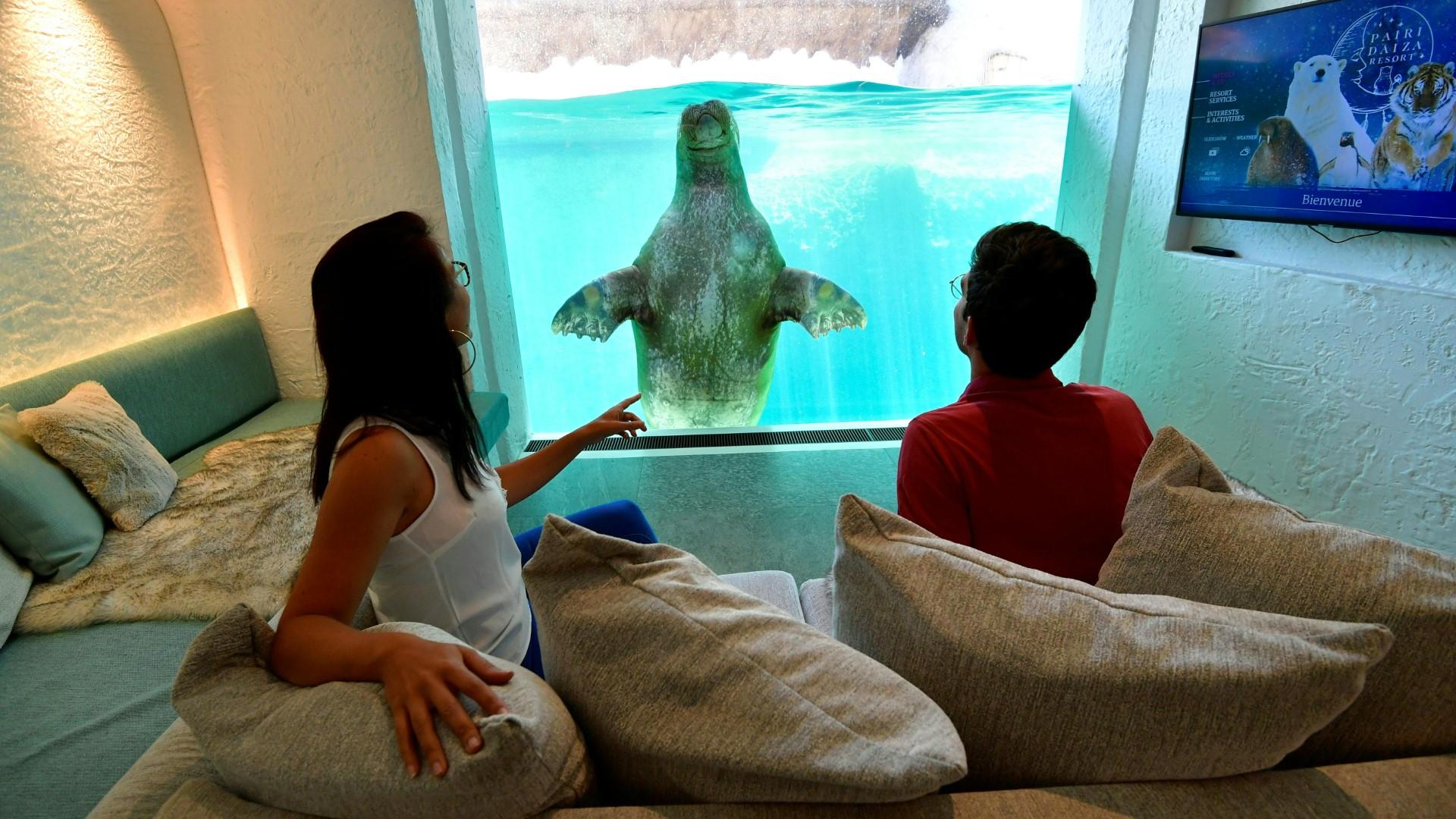 In diesem Hotel übernimmt ein Walross den Weckruf