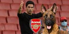 Arsenal-Trainer gibt 22.000 Euro für Wachhund aus