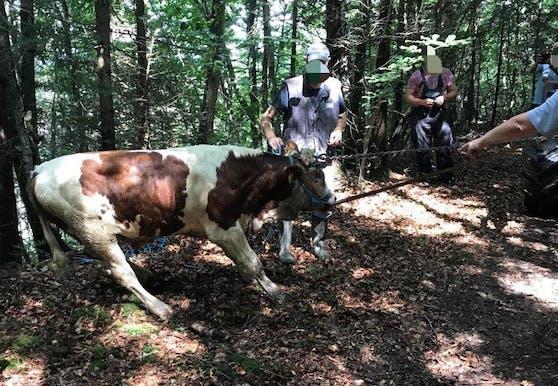 Polizisten und dem Landwirt gelang es das Tier aus dem Inn zu retten.