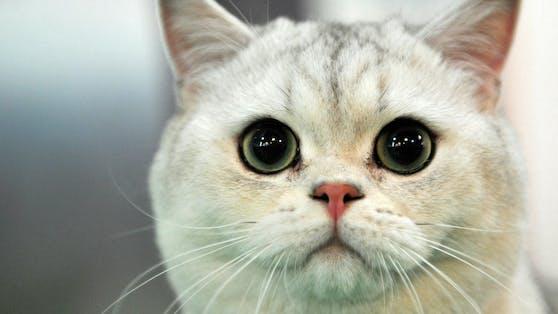 Zum Weltkatzentag stellen wir euch die beliebtesten Katzennamen vor.