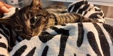 Nach Unfall gelähmt: Besitzer wollte Katze nicht mehr