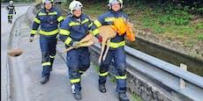"""Feuerwehr befreit """"Bambi"""" aus Wehrkanal"""