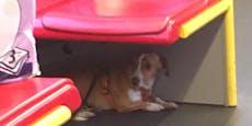 Dringende Suche nach misshandeltem U-Bahn-Hund