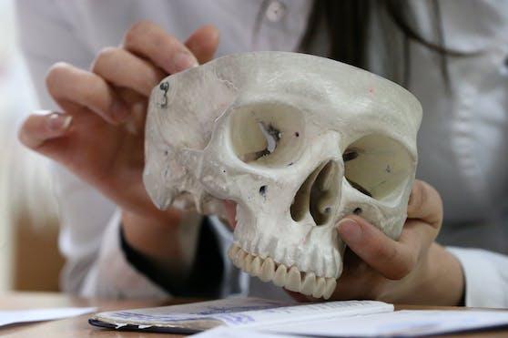 Im Rahmen einer Anatomie-Prüfung an einer russischen Universität wird ein Schädel analysiert. Symbolbild