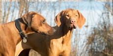 Hundevergewaltiger verpasst Verhandlung & taucht unter