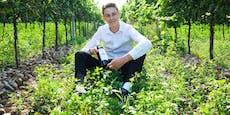 Leo Hillingers Sohn macht eigenen Wein
