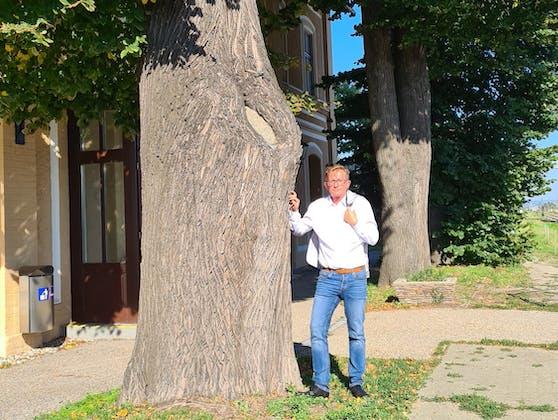 Dorner und einer der Bäume.