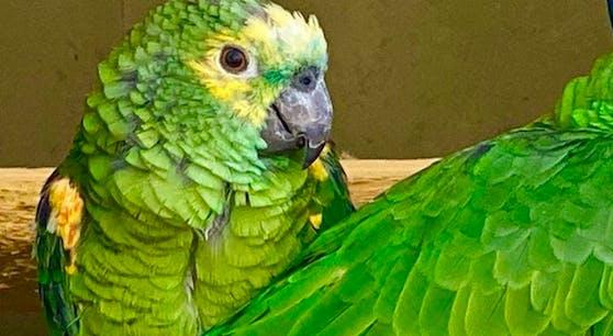 """Der Papagei """"Chico"""""""