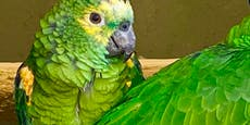 Papagei begeistert mit Beyonce-Parodie