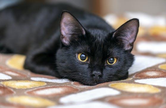 Der deutsche Tierschutzbund möchte darauf aufmerksam machen, dass es ein ungleiches Verhältnis bei der Vermittlung von schwarzen Katzen gegenüber andersfarbigen gibt.