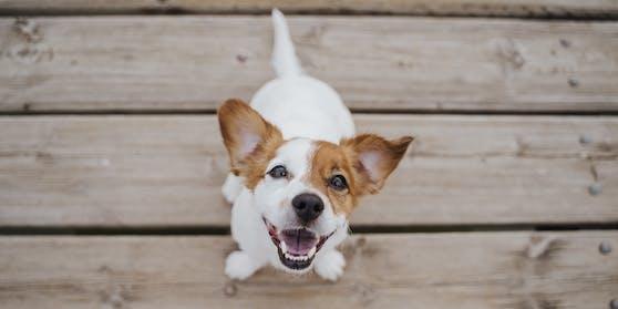 Hunde boomen – erzeugen aber auch ganz schön CO2.