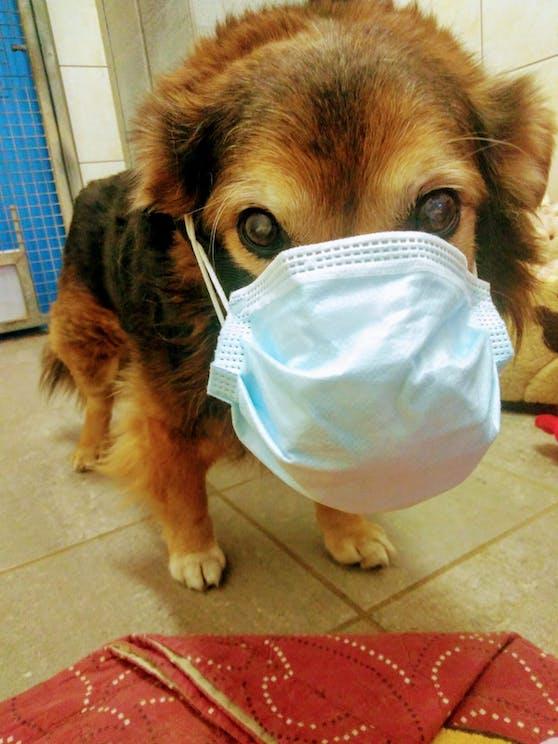 Hund Sammy vom Tierheim Krems