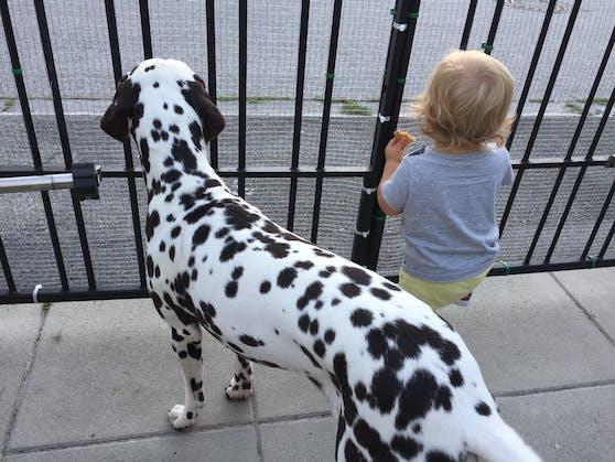 Der gebissene Hund und das Kleinkind.