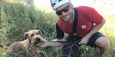 Auf Kasbergalm ausgebüxt: Junger Hund gerettet