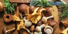 Vergiftungsgefahr! Diese Pilze vertragen keinen Alkohol