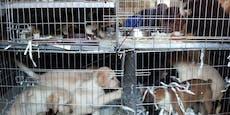 Skrupelloser Hunde-Schmuggel an der Grenze gestoppt