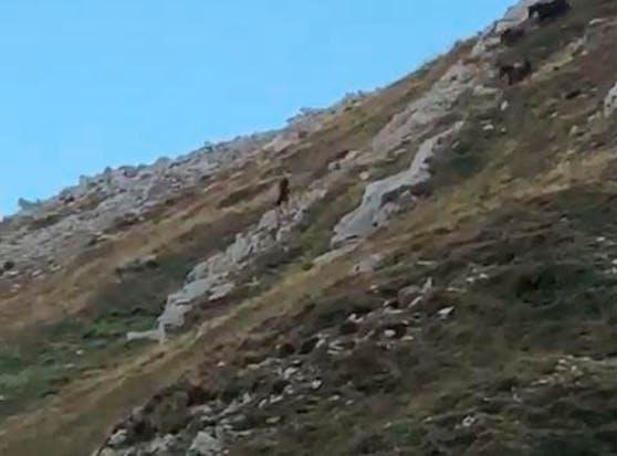 Das Video zeigt mehrere Pferde, die einen Abhang hinunterstürzen.