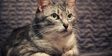 5 Gründe, warum deine Katze nachts stört